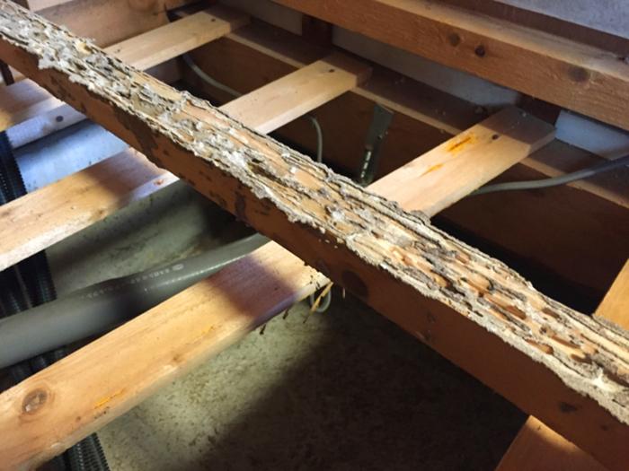 シロアリに食べられた木材